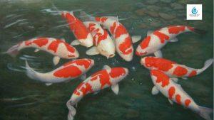 xử lý nước giếng khoan nuôi cá