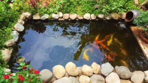 Cách xử lý nước phèn nuôi cá chi tiết tại nhà