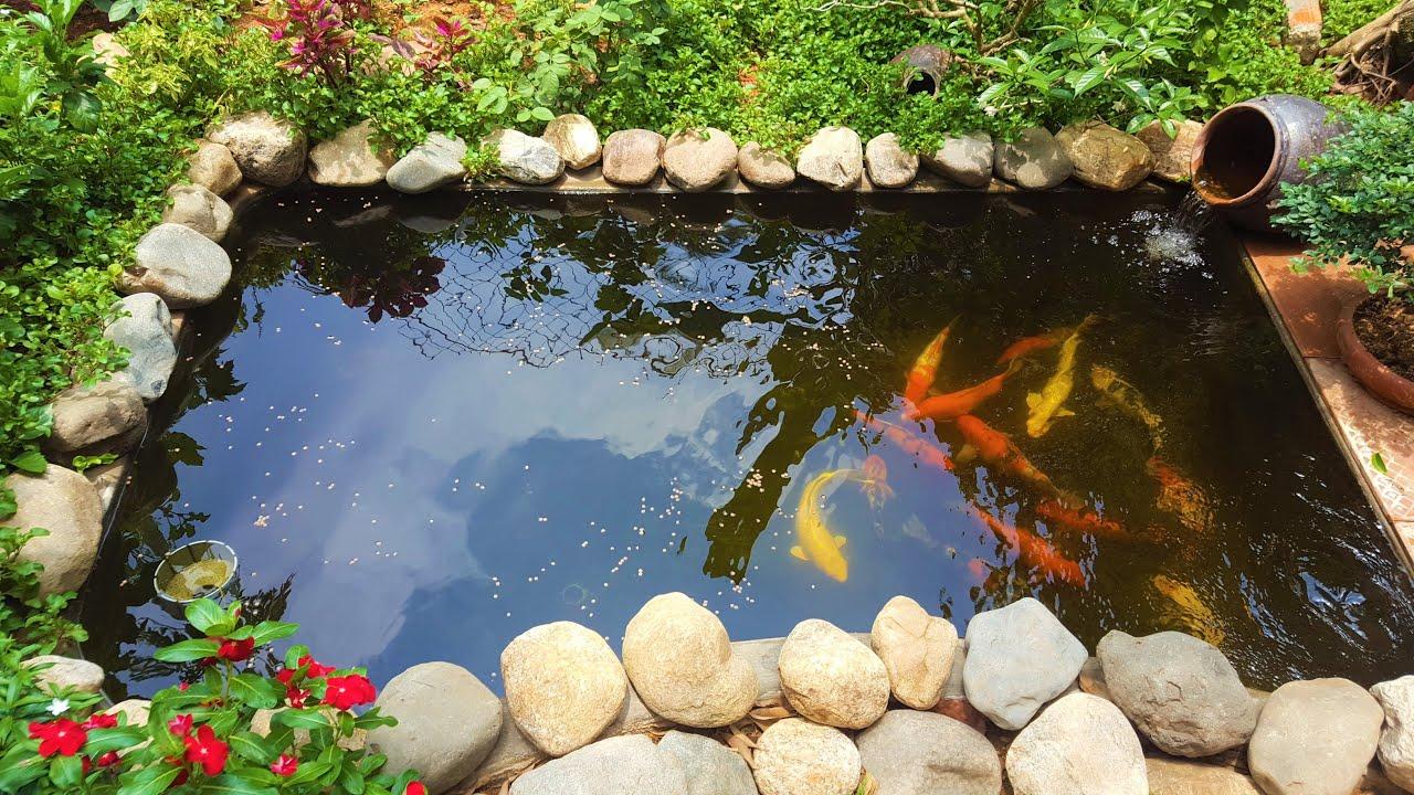 Xử lý nước thải ao nuôi cá