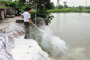 Nước ao nuôi cá được xử lý