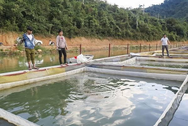 Quy trình xử lý nước thải ao nuôi cá từ A đến Z
