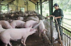 Quy trình xử lý nước chăn nuôi gia súc theo quy chuẩn
