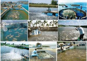 Quy trình xử lý nước thải ao nuôi cá