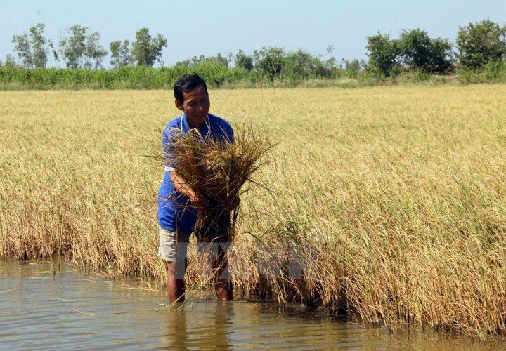 Tình trạng ngập mặn ở các vùng đáng báo động đồng bằng sông cửu long