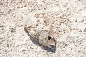 cá chết vì ô nhiễm nước
