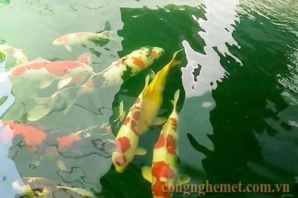 Có thể tiến hành thay bộ lọc mới cho hồ cá