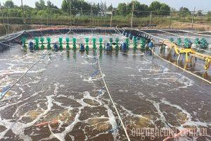 Môi trường nuôi trồng thủy sản