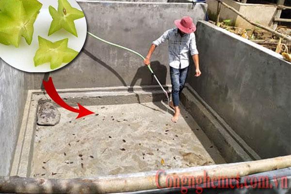Xử lý bể nước ăn mới xây