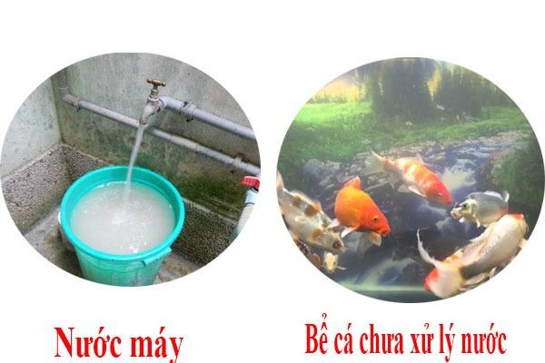 Sử dụng nước máy để nuôi cá