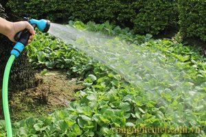 Nước máy để tưới cây trở nên tốt hơn