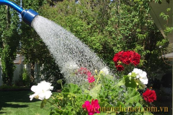 Nước máy sạch đã qua xử lý sẽ giúp cây phát triển tốt hơn